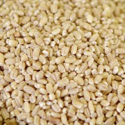 Pearled Barley - 88 oz. #10 can